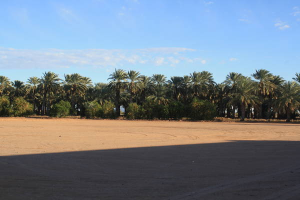 date palm trees in Dateland