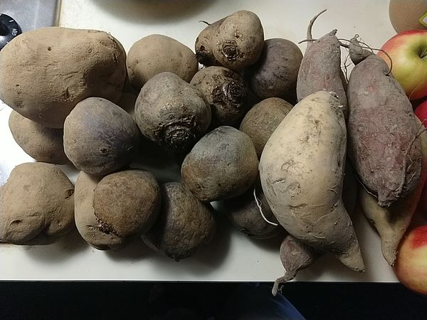 Tuckey's Farm, 2020-04-11, potatoes, sweet potatoes, and red beets